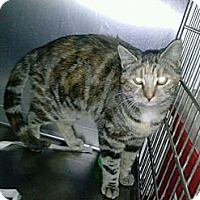 Adopt A Pet :: Timmy - Whitestone, NY