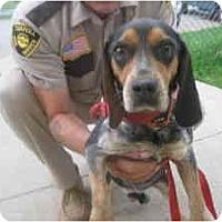 Adopt A Pet :: # 4 Boomer URGENT! - Carrollton, OH