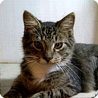 Adopt A Pet :: Whisper - Bradenton, FL