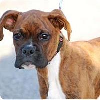 Adopt A Pet :: Tigger - Providence, RI