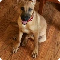 Adopt A Pet :: Bandit (in foster in NC) - Cranston, RI