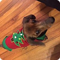 Adopt A Pet :: Nitro - Jacksonville, FL