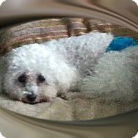 Adopt A Pet :: Adopted!!Jackie - OH - Tulsa, OK