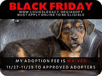 Dog Adoption Fee Waived For Black Friday