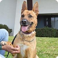 Adopt A Pet :: Portia - Downey, CA