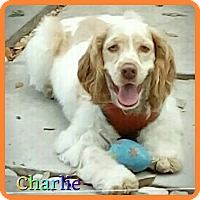 Adopt A Pet :: Charlie - Hollywood, FL