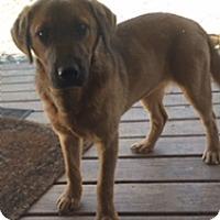 Adopt A Pet :: Sadie - Stewart, TN