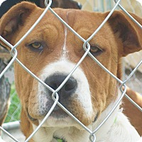 Adopt A Pet :: Adelia - Mexia, TX