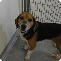 Adopt A Pet :: HUNTER - Sandusky, OH