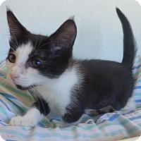 Adopt A Pet :: Halo - Manning, SC