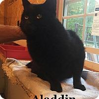 Adopt A Pet :: Aladdin - Bentonville, AR