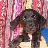 Adopt A Pet :: Danny - Oviedo, FL