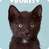 Adopt A Pet :: Boris - Tucson, AZ