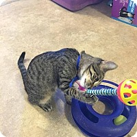 Adopt A Pet :: Cooper - Hanna City, IL