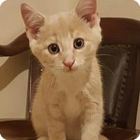 Adopt A Pet :: Jerry - E. Claridon, OH