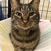 Adopt A Pet :: Jason - Maryville, MO