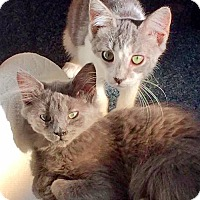 Adopt A Pet :: Mimi & Sadie, Best Babies EVER - Brooklyn, NY