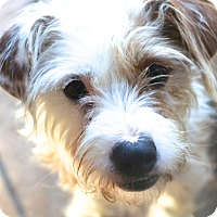 Adopt A Pet :: Ashley and Kassie - Woonsocket, RI