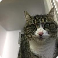 Adopt A Pet :: Ziva - Cumming, GA