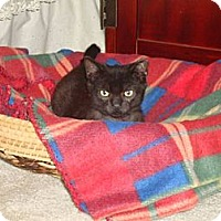 Adopt A Pet :: Midnight - Barnegat, NJ