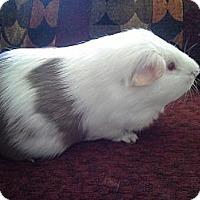 Adopt A Pet :: Watson - San Antonio, TX