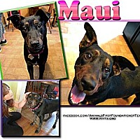 Adopt A Pet :: MAUI - Irving, TX