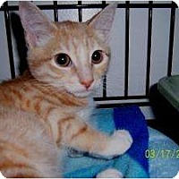 Adopt A Pet :: Parsley - Island Park, NY