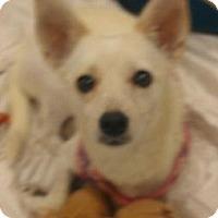 Adopt A Pet :: Blanca - Phoenix, AZ