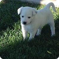 Adopt A Pet :: Miranda - Greeley, CO
