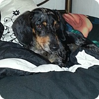 Adopt A Pet :: Frankie - Natchitoches, LA