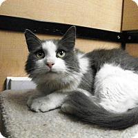 Adopt A Pet :: Tess - Riverside, CA