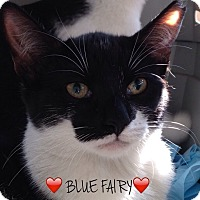 Adopt A Pet :: BLUE FAIRY - Great Neck, NY