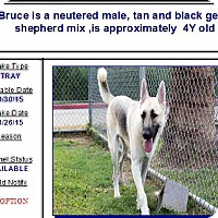 Adopt A Pet :: Bruce - Black Forest, CO