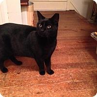 Adopt A Pet :: Sansom - Philadelphia, PA