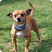 Adopt A Pet :: Danny - Waldorf, MD