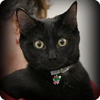 Adopt A Pet :: Cosmos - Hudson, WI