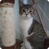 Adopt A Pet :: Wild man - Odessa, TX