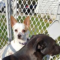 Adopt A Pet :: Bailey - Lebanon, ME