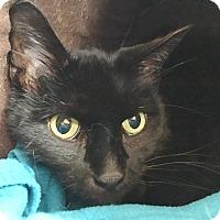 Adopt A Pet :: Clarence - Salisbury, MA