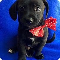 Adopt A Pet :: Marcel - Irvine, CA
