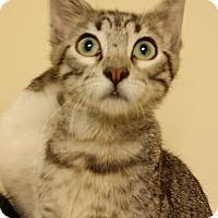 Adopt A Pet :: Raphael - Edmond, OK