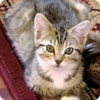 Adopt A Pet :: Ktlynn - Oakland Park, FL