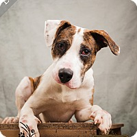 Adopt A Pet :: Larry - Ottawa, KS