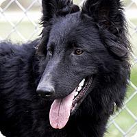 Adopt A Pet :: Rose - Wayland, MA