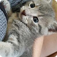 Adopt A Pet :: Fran - Lexington, KY