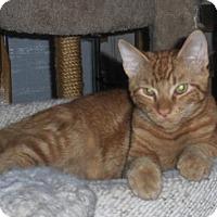 Adopt A Pet :: Benjamin - Trenton, NJ