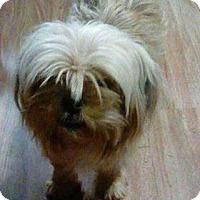 Adopt A Pet :: Daisy - Rexford, NY