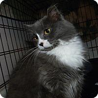 Adopt A Pet :: Prissy - Stafford, VA