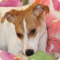 Adopt A Pet :: JaJa - Avon, NY