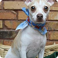 Adopt A Pet :: Bandit - Benbrook, TX
